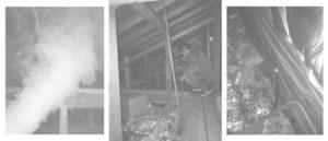 茨城県のネズミ駆除